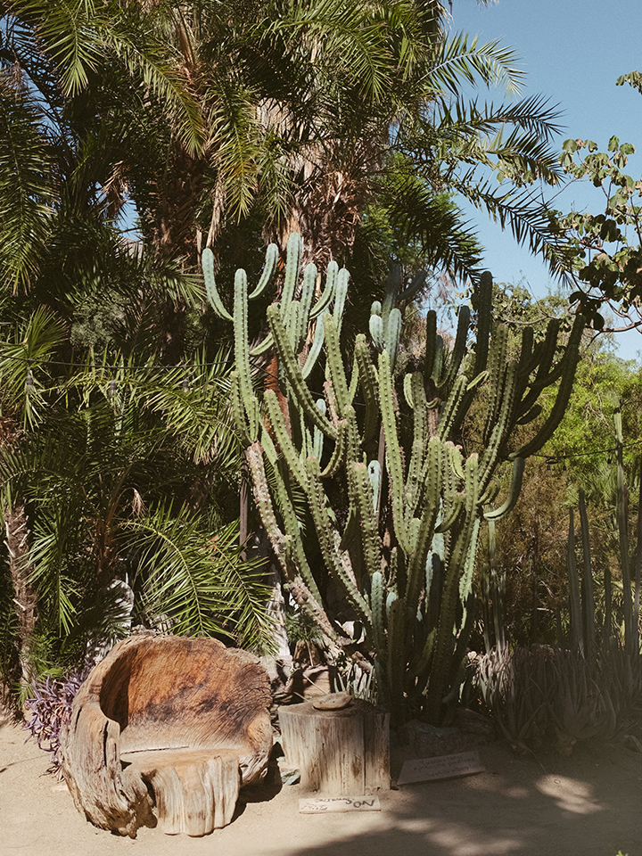 Instaworthy spots in around palm springs style lullaby - Moorten botanical garden and cactarium ...